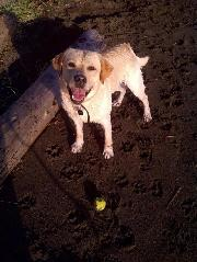 Must like dogs! My well-trained, gentle Yellow Lab lives here too!